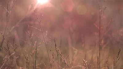 Fall Field 8
