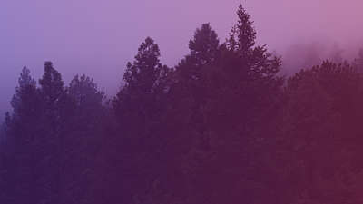 Misty Forest Purple