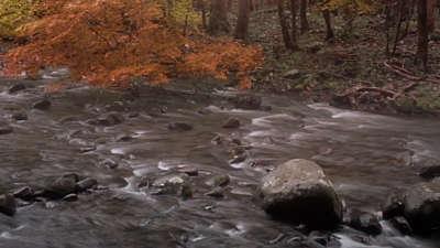 Rivers 5