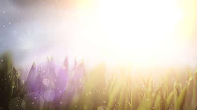 Summer Sun Grass