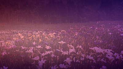 Wildflower 6