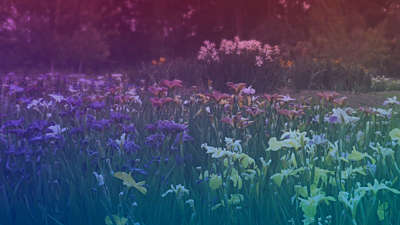 Wildflower 7