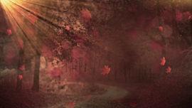 Fall Background 3 Loop Vol4