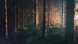 Last Light Trees
