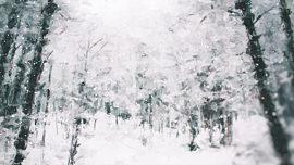 Let It Snow Tromping