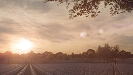 Military Cemetery Sunset