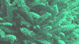 Modern Winter Trees 02