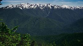Mountain Pines Majestic Peaks