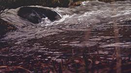Nature Walk Brook