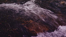 Nature Walk Flow