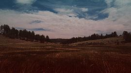 Nature Walk Grassland