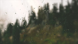 Rainy Day Forest