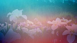 Wildflower 10