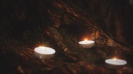 Willow Lights Awaken