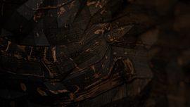 Woodfields Dark Chic